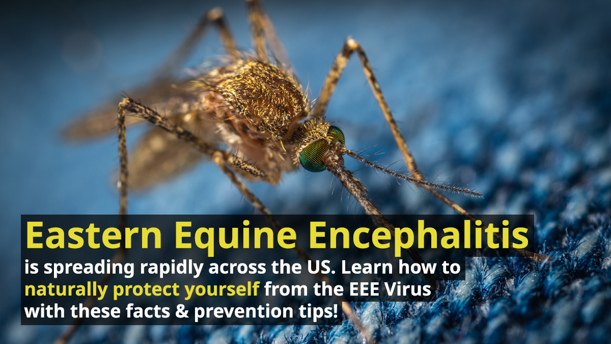 Eastern Equine Encephalitis is spreading rapidly across the US. Learn how to naturally protect yourself from the EEE Virus with these facts & prevention tips!
